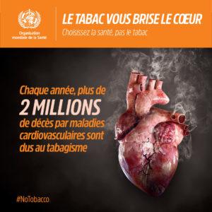 Journée mondiale sans tabac : chaque année, plus de 2 millions de décès par maladies cardiovasculaires sont dus au tabagisme.